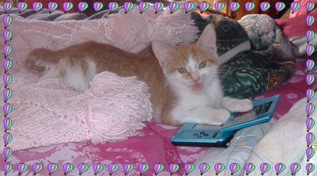 My kitty Junior playing DS