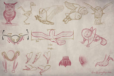Owlf - Owl Sketch Studies