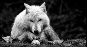 Intimidate by mudwrestler by WildlifePhotoClub
