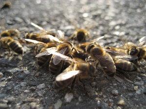 Bee Squad by Ceejay887 by WildlifePhotoClub