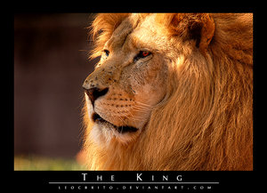 The King by Leocbrito by WildlifePhotoClub