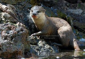 Otter by Feetpeet by WildlifePhotoClub