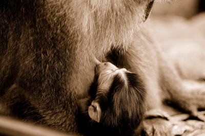 breastfeeding by alashotokan by WildlifePhotoClub