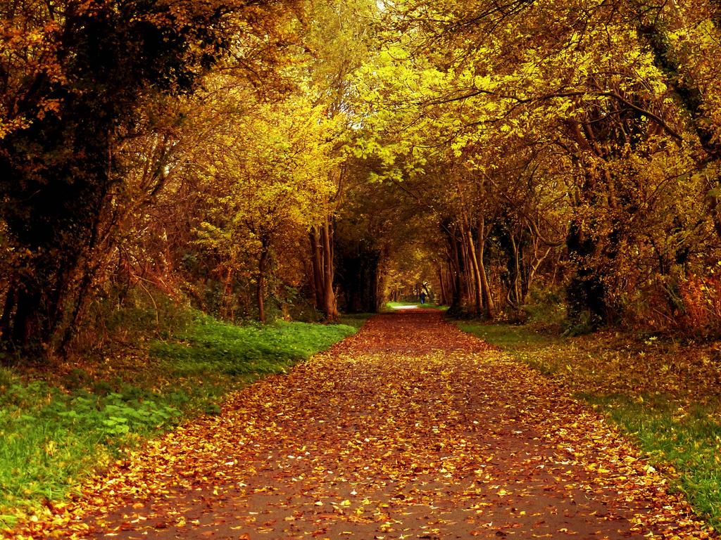 fall season in