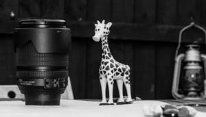 You're having a giraffe!