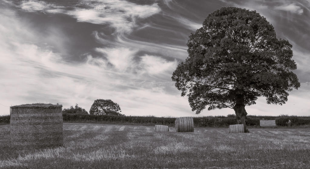 Hay! (bw) by friartuck40