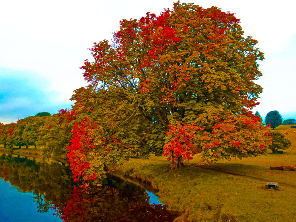 Tree '@ the stream by friartuck40
