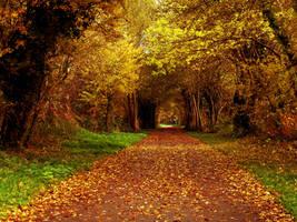 Golden fall 2 by friartuck40