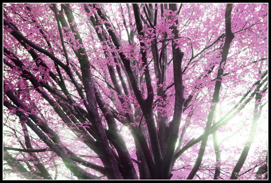 A Beautiful Tree in My Garden Of Dreaming by Psychasthenique