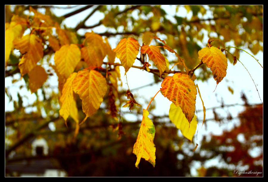 Automne by Psychasthenique
