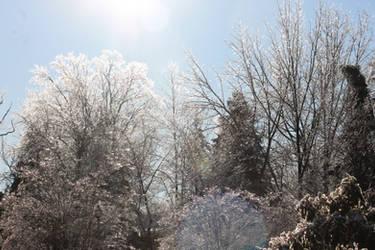 12-19 3659 Sunrise over the glasss trees