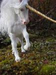 White Unicorn Mare