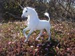 New Dapple Gray Stallion