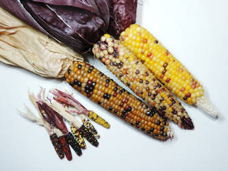 Miniature Corn and Miniature Corn by Ethereal-Beings