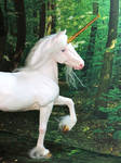 White Unicorn Stallion 2018 by Ethereal-Beings