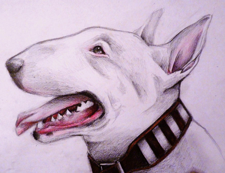 white english bull terrier face. english bull terrier by midulcelocura white face l