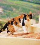 Rooftop Kitty