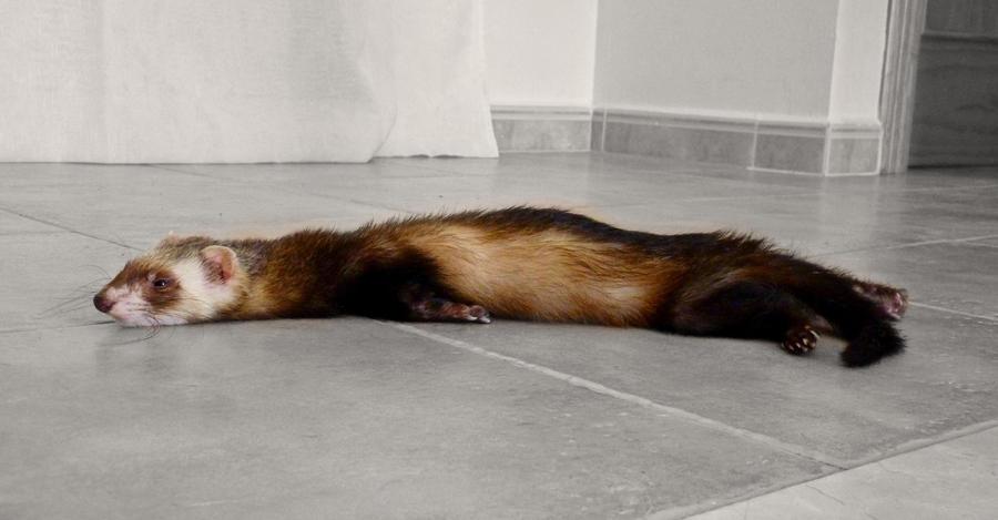 Sleepy Bojangles by MiDulceLocura