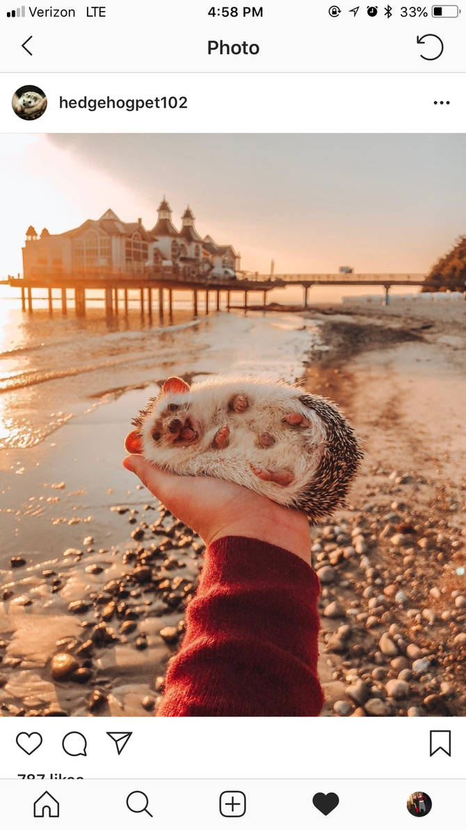 Show this hedgehog some love   by Maddiegrace1999