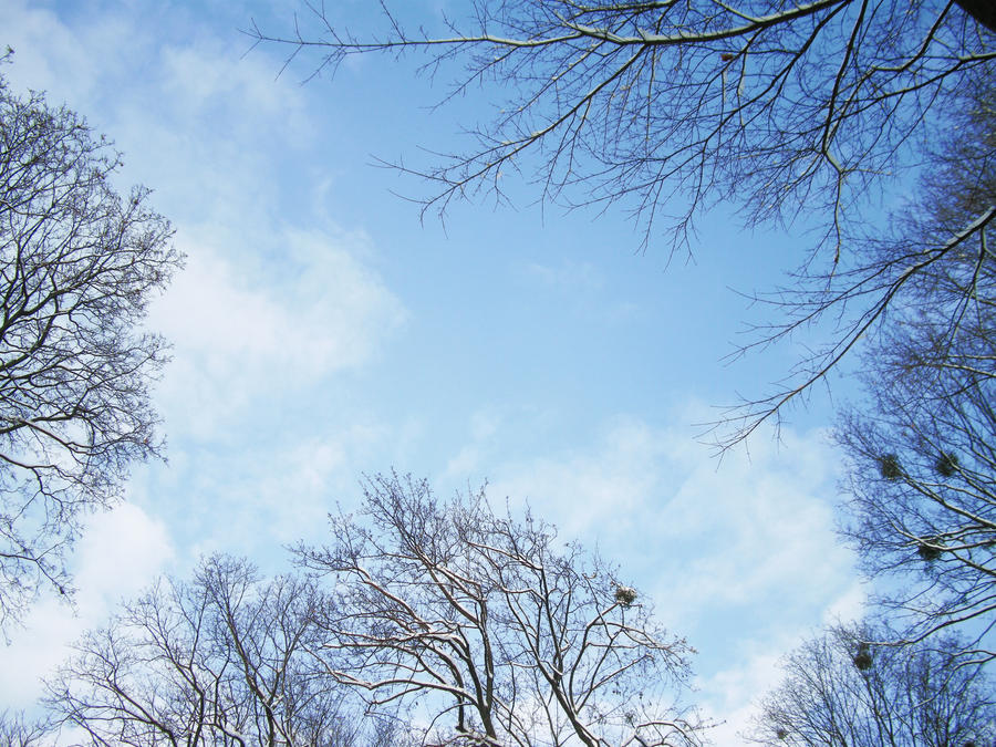 winter 3 by OriAkuma