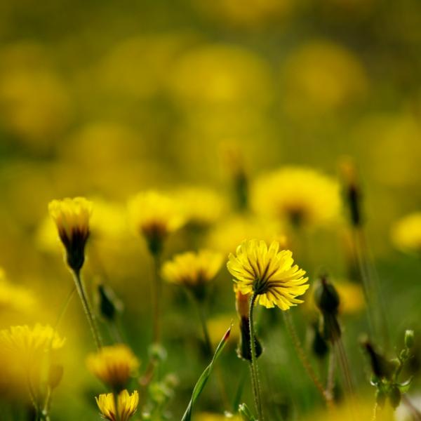 http://fc04.deviantart.net/fs70/f/2010/090/4/e/i_will_paint_a_million_suns_by_mr_twingo.jpg