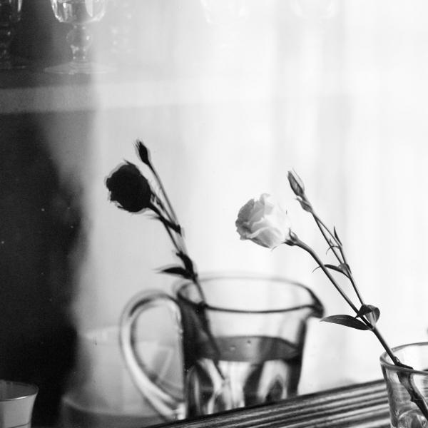 le reve de la rose blanche by Piarvi-Recherreen