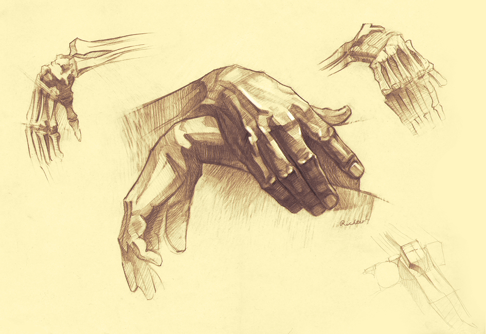 Anatomy of hands by RichterBach on DeviantArt