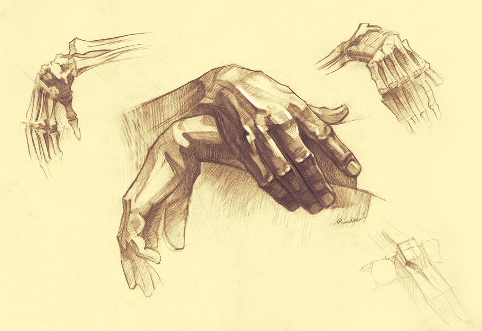 Anatomy Of Hands By RichterBach On DeviantArt