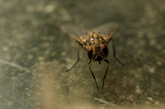 Fly on glass