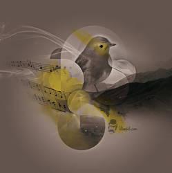 NAM birdy NAM