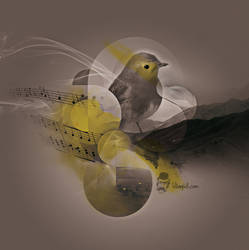NAM birdy NAM by sensukestudio