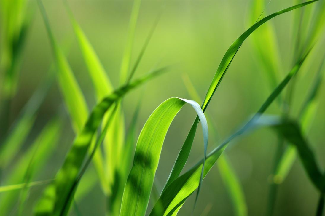 green by felinda