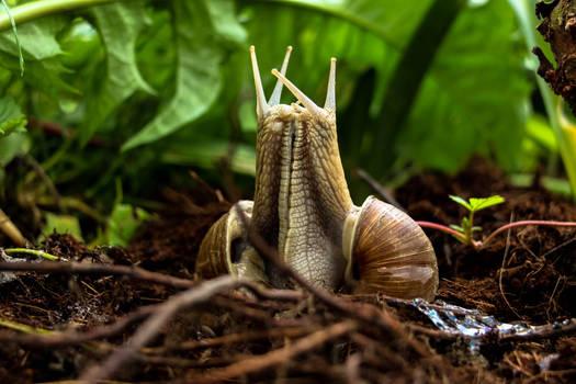 Snails that got stuck together :)