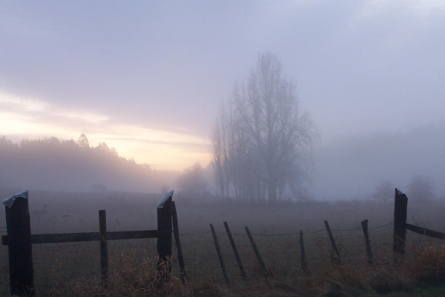 fog by 4estfire