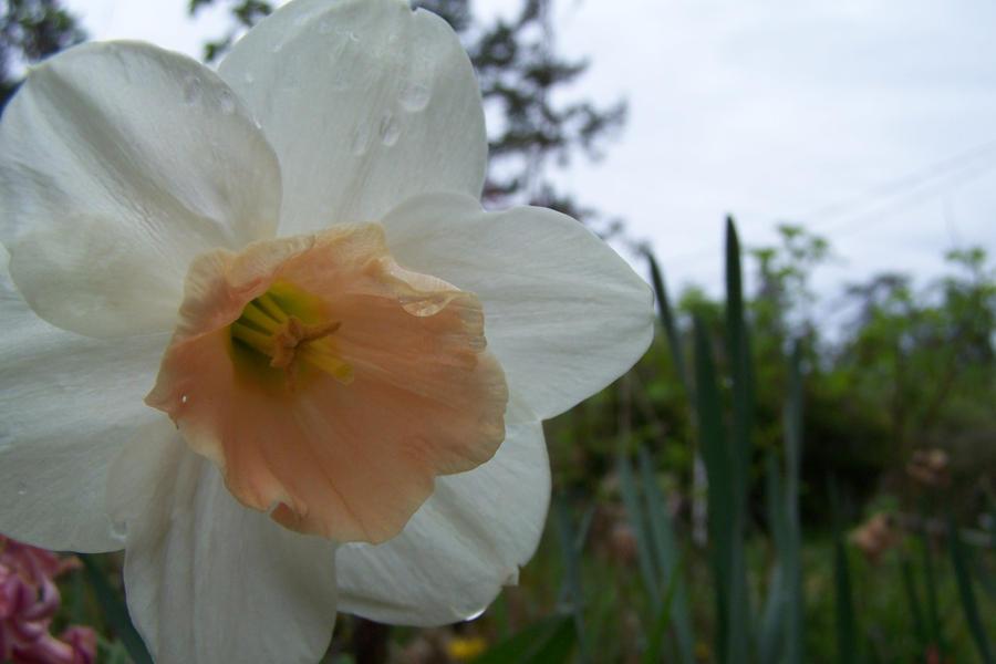 spring by 4estfire