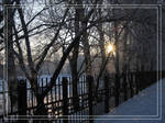 Winter mint 2