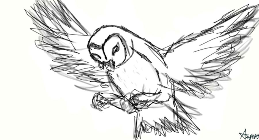 Flying Owl Drawing Tumblr Animalcarecollege Info