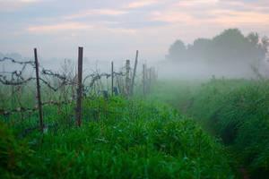Morning mist by rain