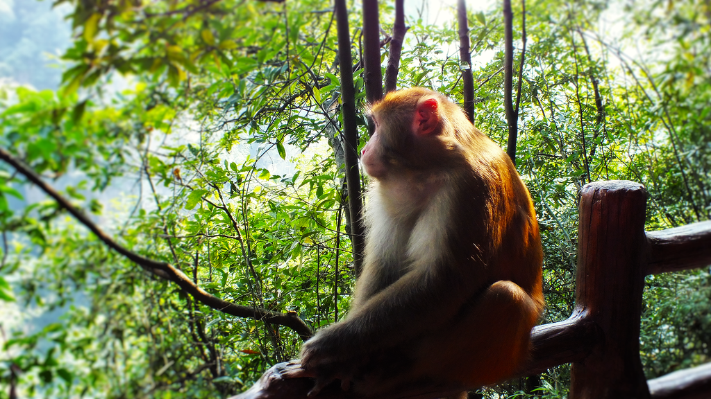Zhangjiajie - Wild Monkey by Freedom4Arts