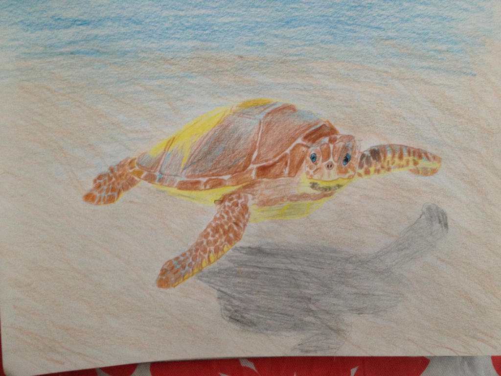 Sea Turtle by luvwlf468