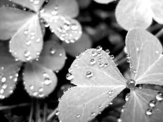 Clover Drops