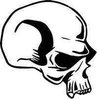 Skull Illustrator by Arroyadorr