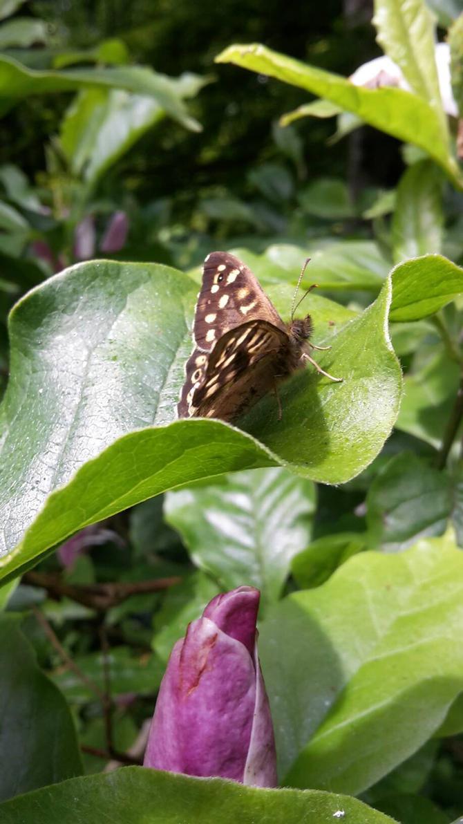 Butterfly  by ObsidianVixen