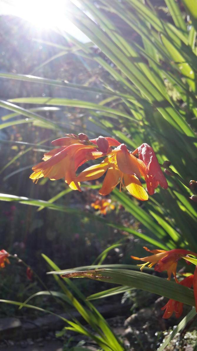 Morning Bloom by ObsidianVixen