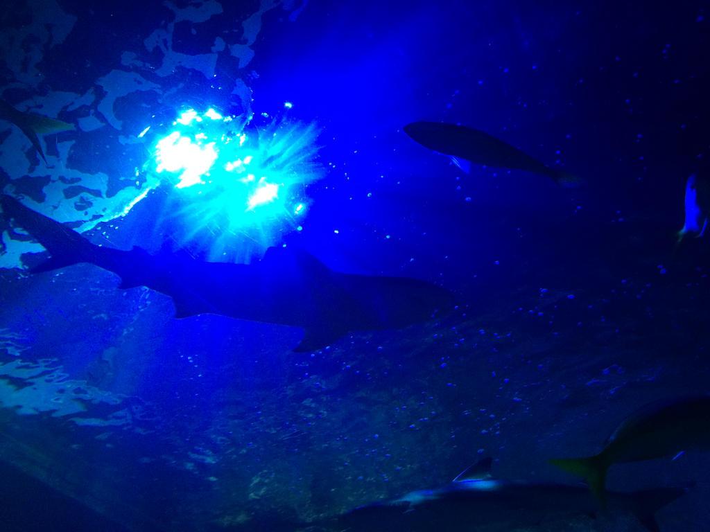 Blackpool Aquarium - sharks by Trueform