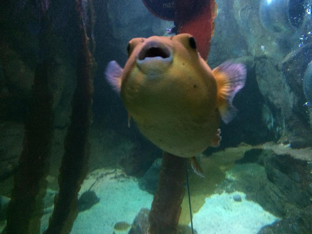 Blackpool Aquarium - Puffer Fish by Trueform