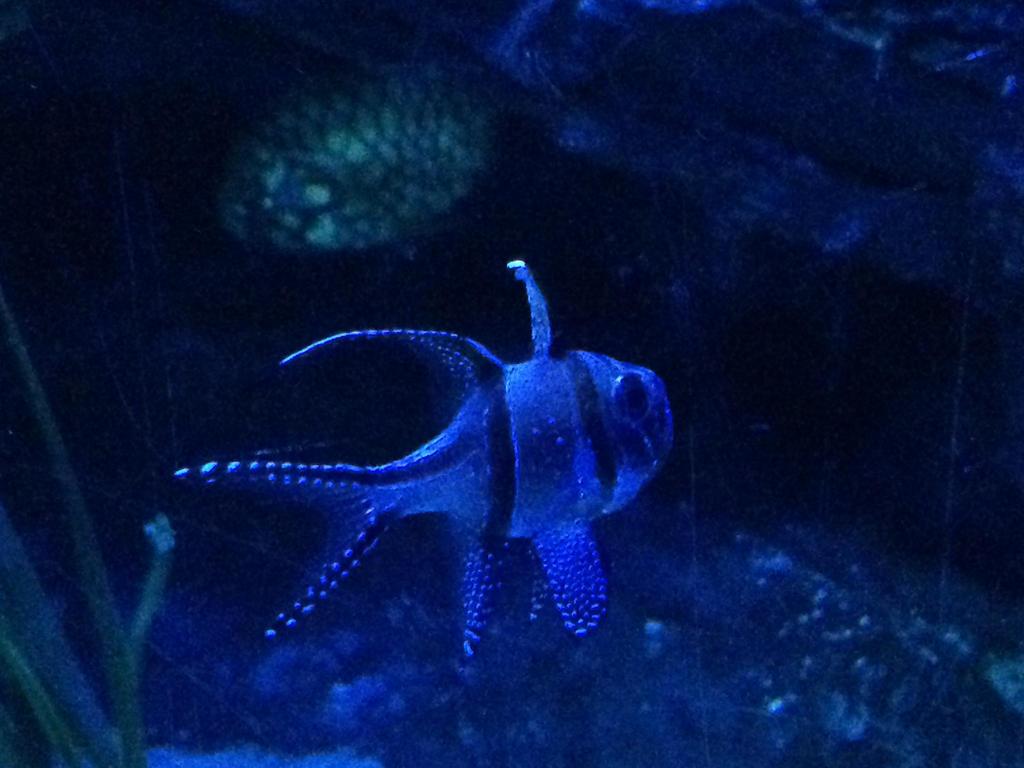Blackpool Aquarium 3 by Trueform