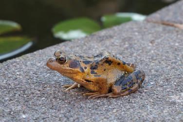 Relaxing Frog Queen by Trueform