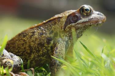 Frog King's Survey by Trueform