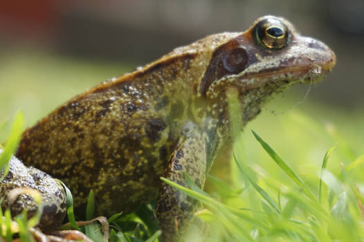 Frog King's Survey